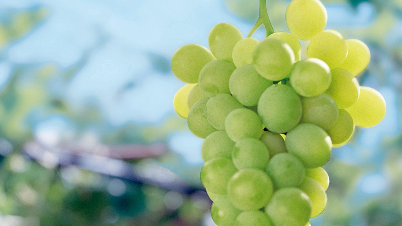 Guter Vorsatz mehr Obst essen?