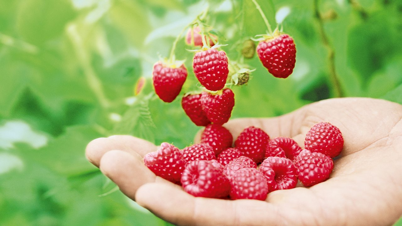 Greenpeace confirms: SanLucar is good for berries