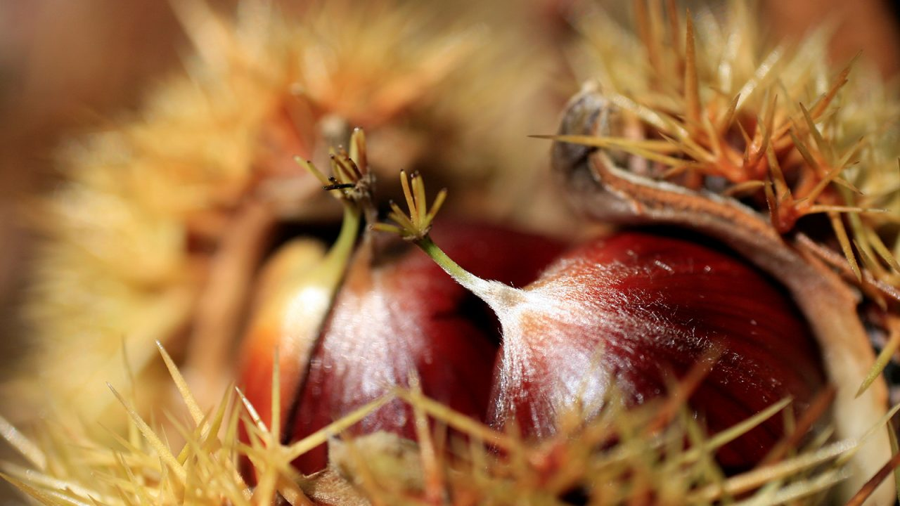 Sweet Chestnuts to fight autumn depression