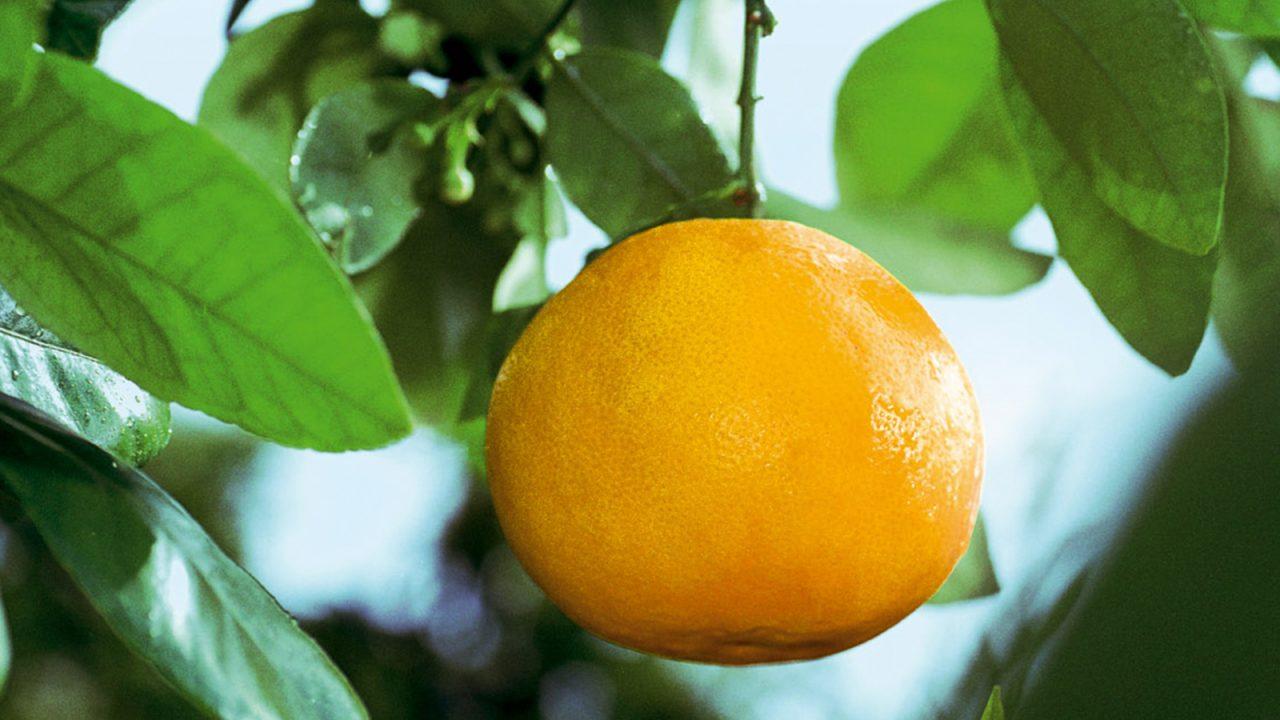 ¿Dónde encontramos la vitamina C?