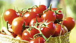 sanlucar-tomate-werbespot
