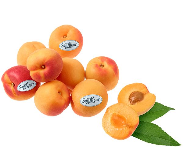 Aprico2t
