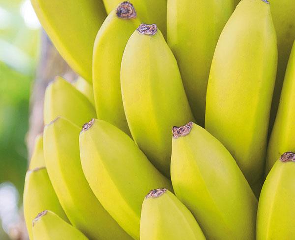 Bananen2