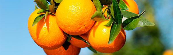 Mandarinen2