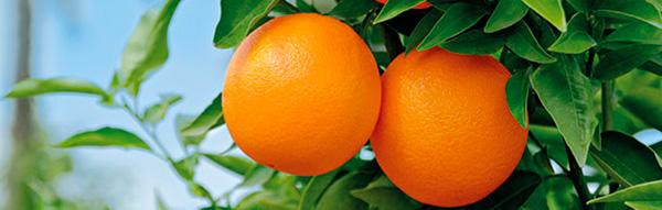 Mandarinen3