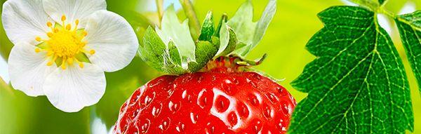 Texto_Erdbeeren2_