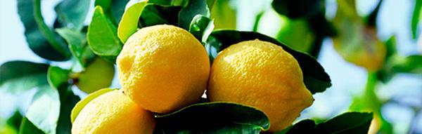 Zitronen3