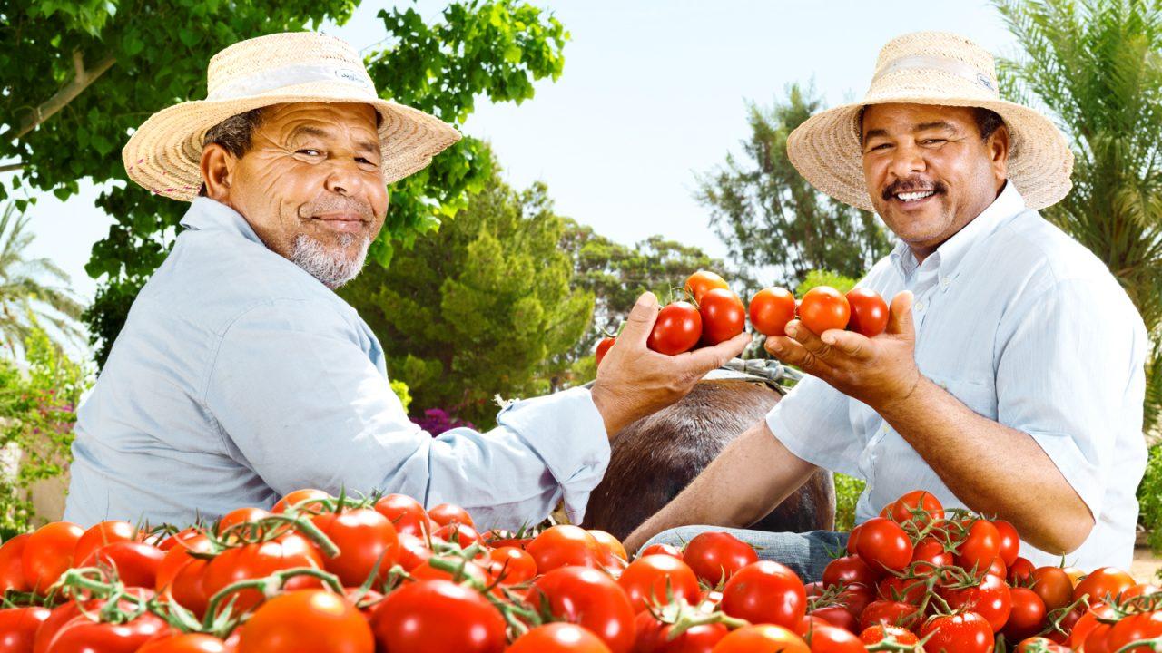 Für jeden Anlass die richtige Tomate