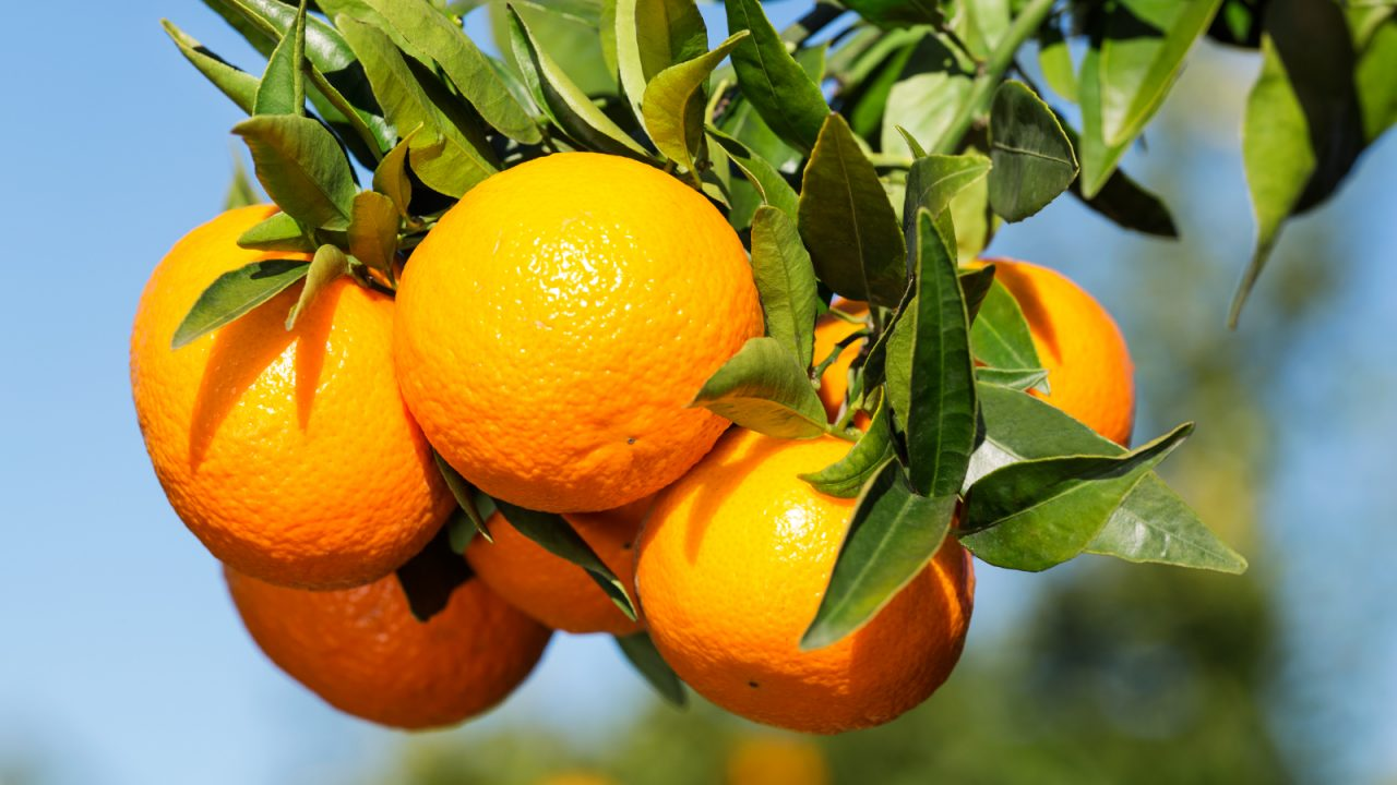 mandarinas Orri-entrada-n5