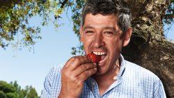 Meisteranbauer Erdbeeren