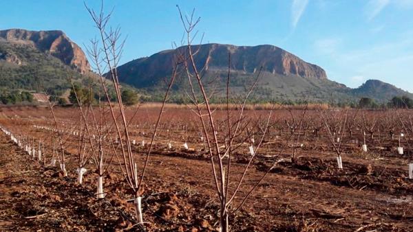 Hege und Pflege für zarte Aprikosen