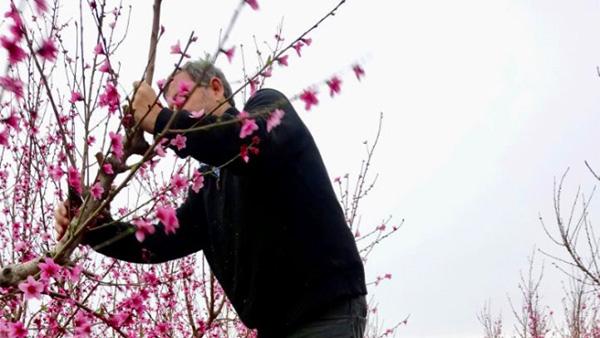 Tunisia in full bloom