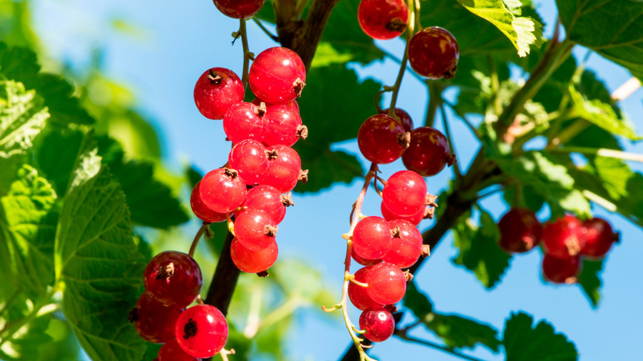 Fruit and vegetables – great for diabetics