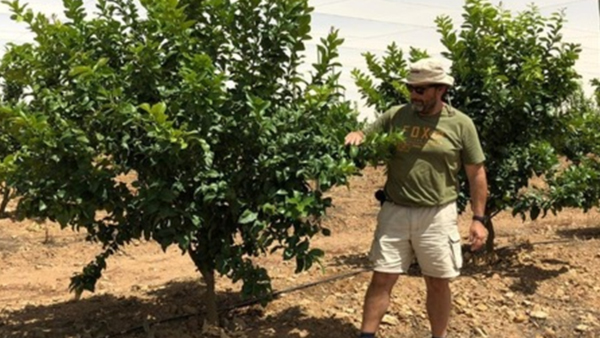 Pampering program for small citrus trees