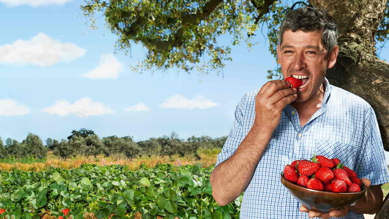 Süße Sonne – Unsere Erdbeersorte »Inspire«
