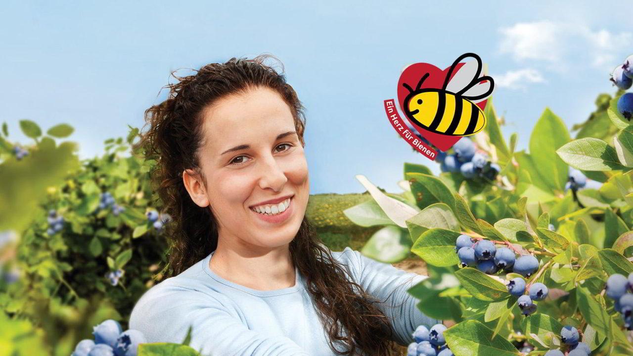 Bienen fliegen auf unsere Blaubeeren