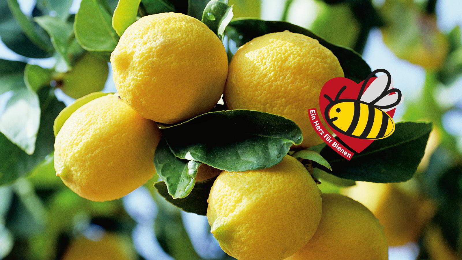 Über Früchte