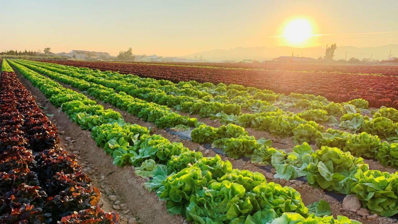 Brócoli y compañía contra la pandemia