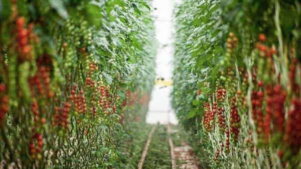 SanLucar Farmen