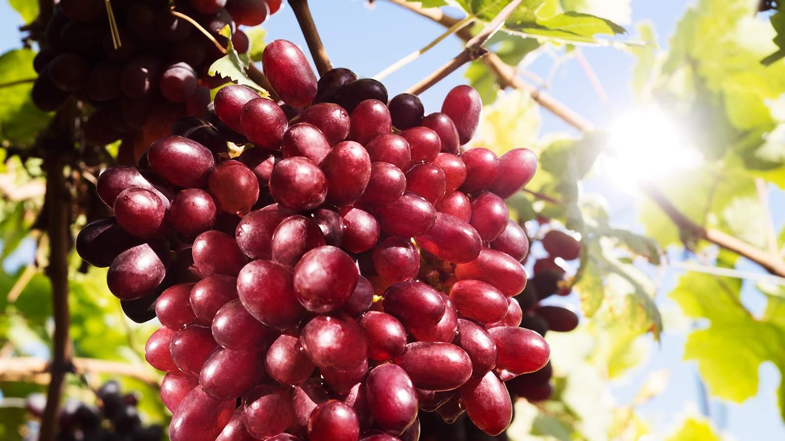 SanLucar und SING – Früchte zum Mitsingen