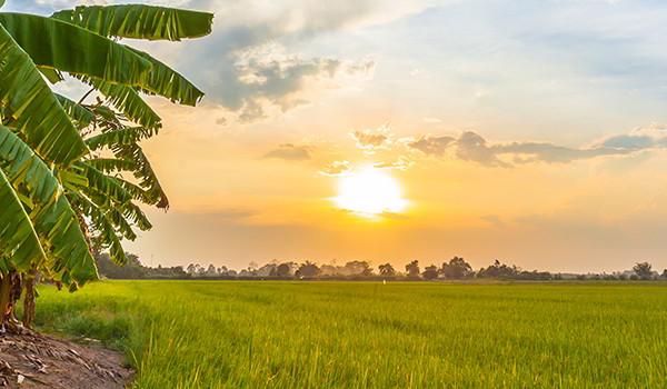 banana-paisaje-desplegable
