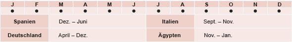 Spanien: Dezember - Juni, Italien: September - November, Deutschland: April -Dezember, Aegypten: November - Januar
