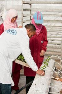 Tomatenpflanzung in der SanLucar Oase