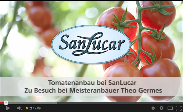 tomate_artikel_-video