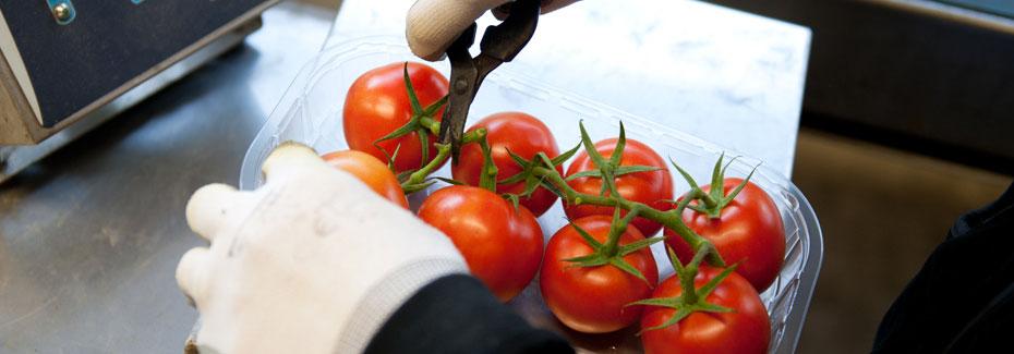 tomates en la prueba de calidad